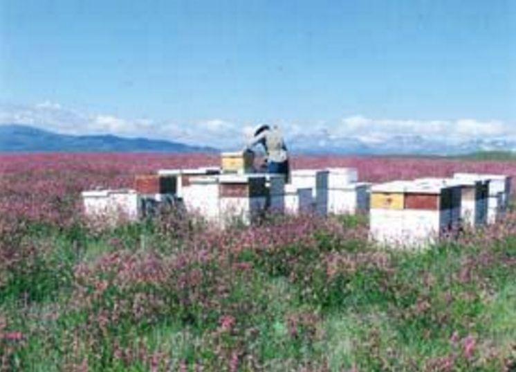 'Solar Wall' Warms Up Wentzel Apiaries